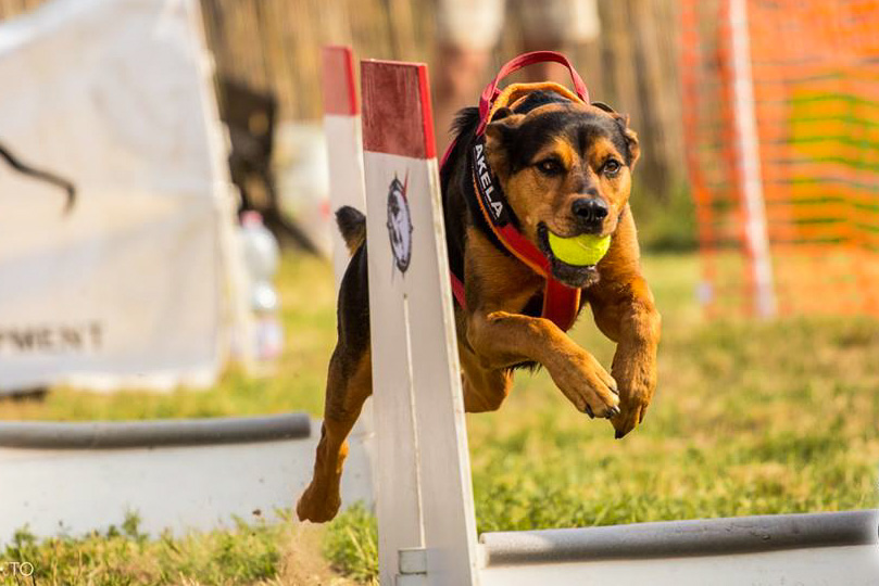 flyball 1